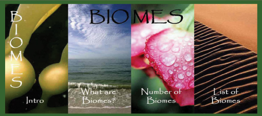 why are biomes important