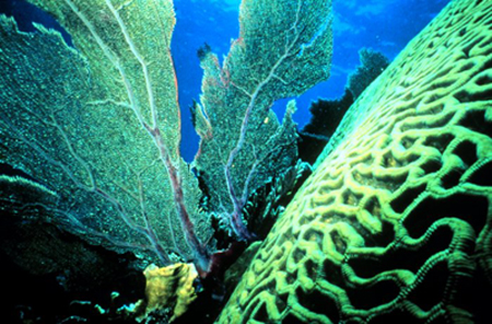 Coral reef plant life